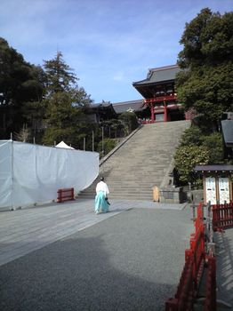 Catastrophe Tourism in Kamakura, 倒れた大銀杏に群がる観光客
